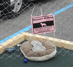 Brownsburg Animal Clinic's hole at Pup Putt 2010