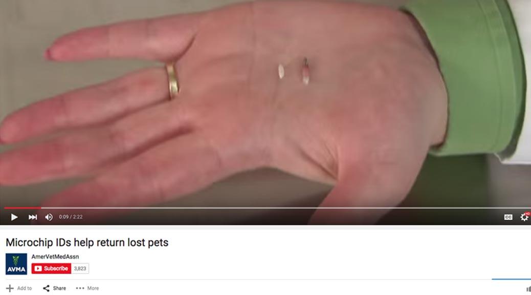 avmamicrochipvideo